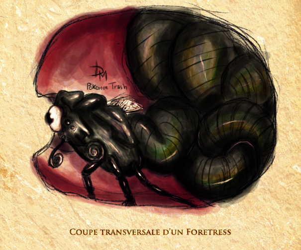 foretress coupe transversale